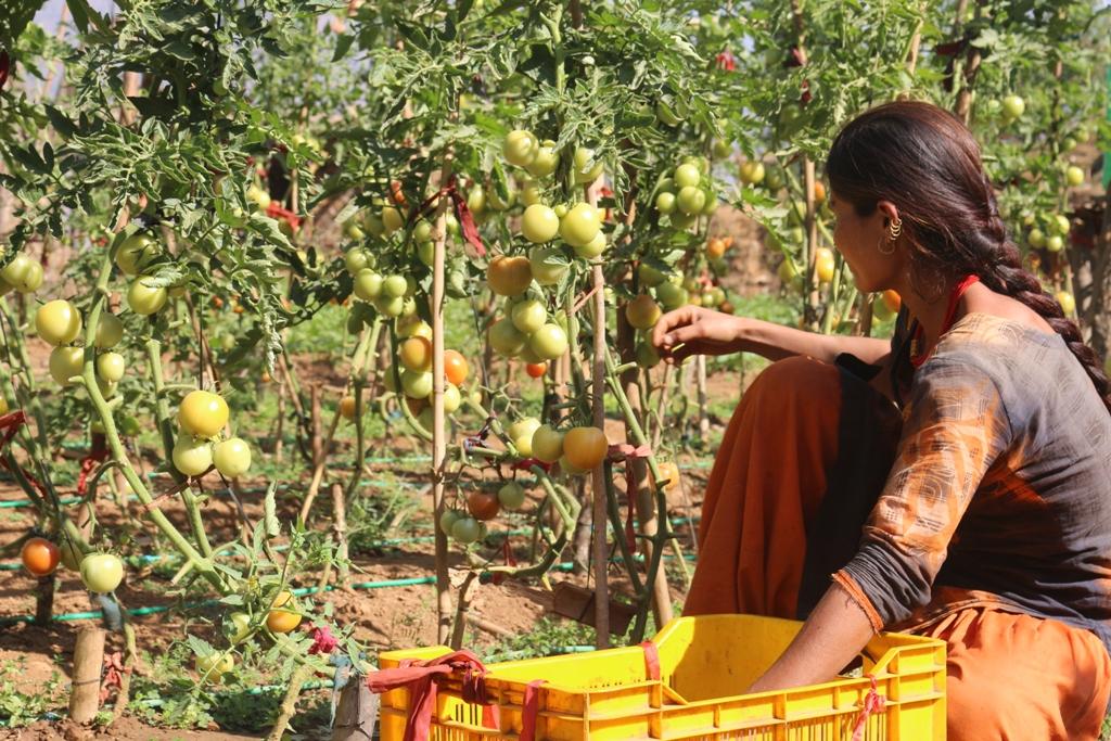 ग्रामिण भेगका महिला व्यवसायिक तरकारी खेतीमा